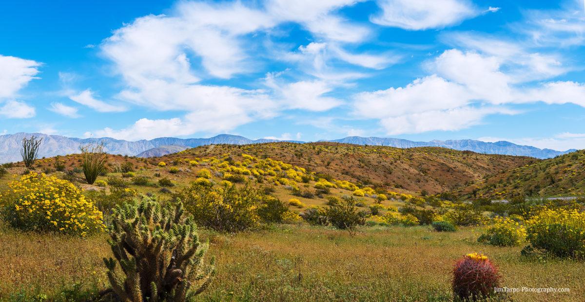 borrego-springs vista of flowers
