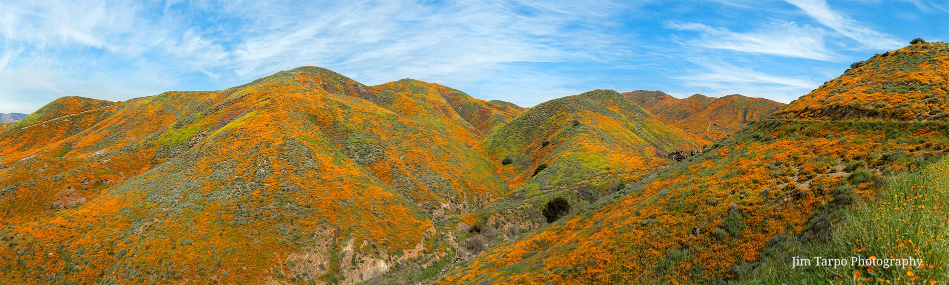 Walker Canyon Poppies Super-Bloom