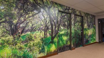 High Resolution Wall Mural Image